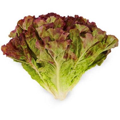 Lettuce / Laitue, Red Leaf, Organic