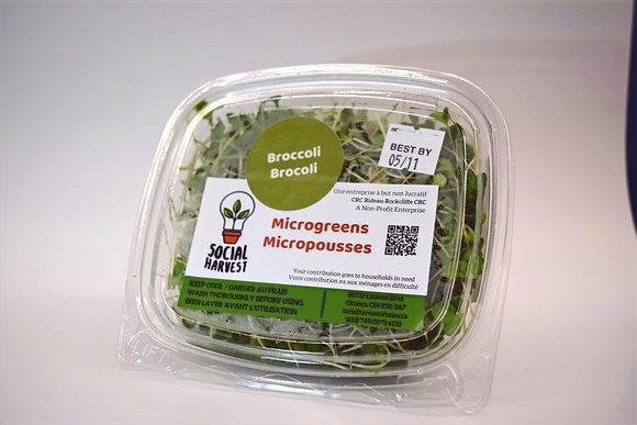 Microgreens, Broccoli (50 g)