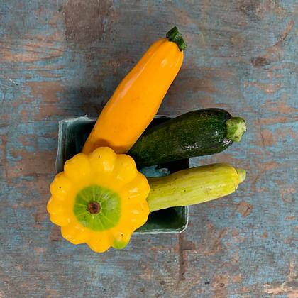 Zucchini / Courgette, Organic
