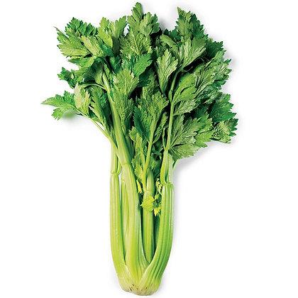 Celery / Céleri, Organic
