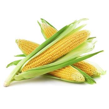 Corn / Maïs