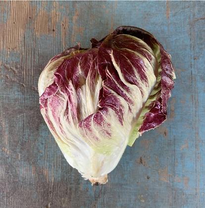Lettuce / Laitue, Radicchio, Organic