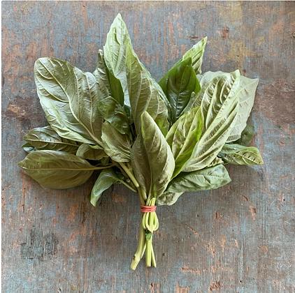 Basil / Basilic, Organic