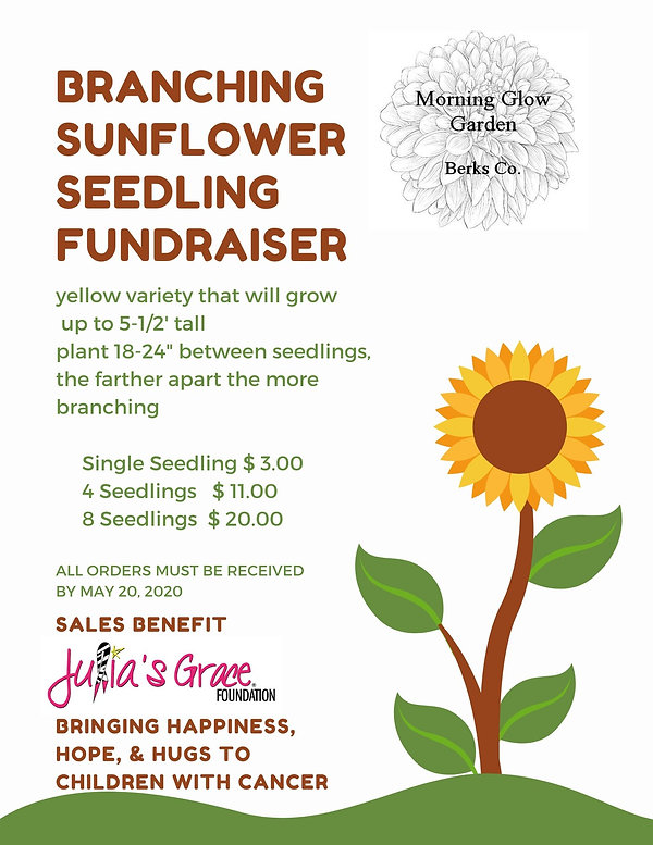 Sunflower Seedling Sale.jpg