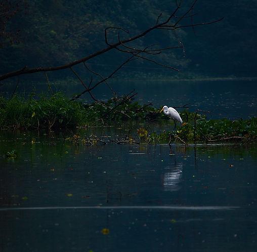 pexels-fokrul-bhuiyan-1649386.jpg
