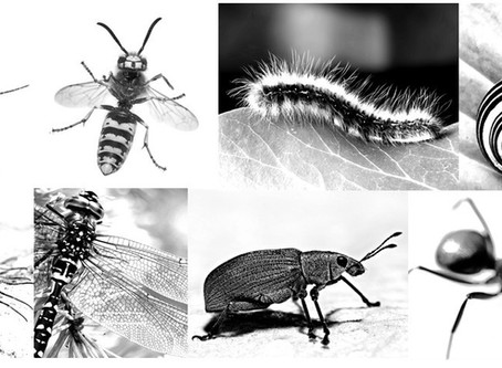 Tales from the Earth: Earwig
