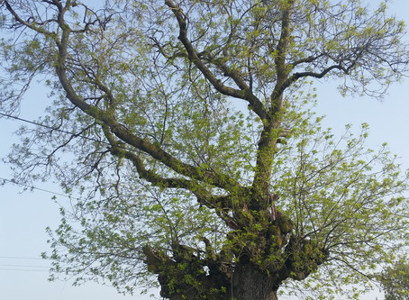 Tales from the Earth: Tree Talk