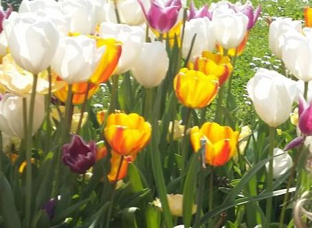 Spring in Istanbul