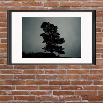 Llithfaen Tree