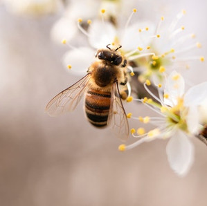 Bees—So Much More Than Honey