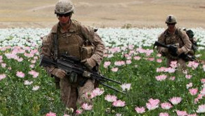 U.S., NATO and Afghan Poppy Policies: Time for a Change