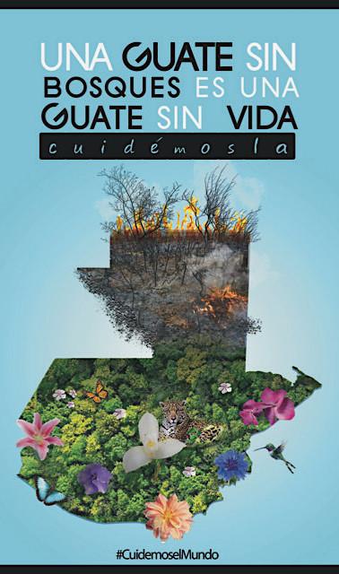 Guate sin bosques