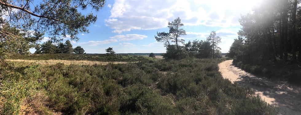 Landschap 1 breed