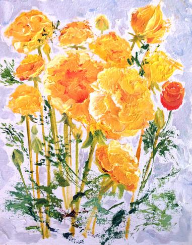 Ranunculus One