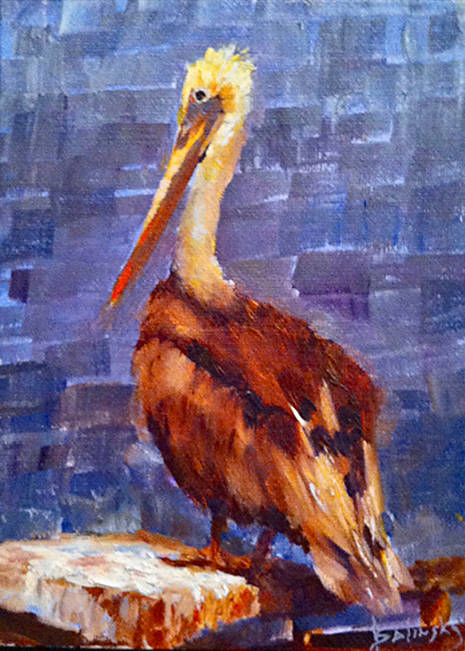 Charlie the Pelican