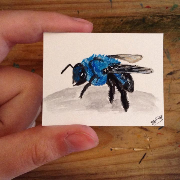 Blue bees exist