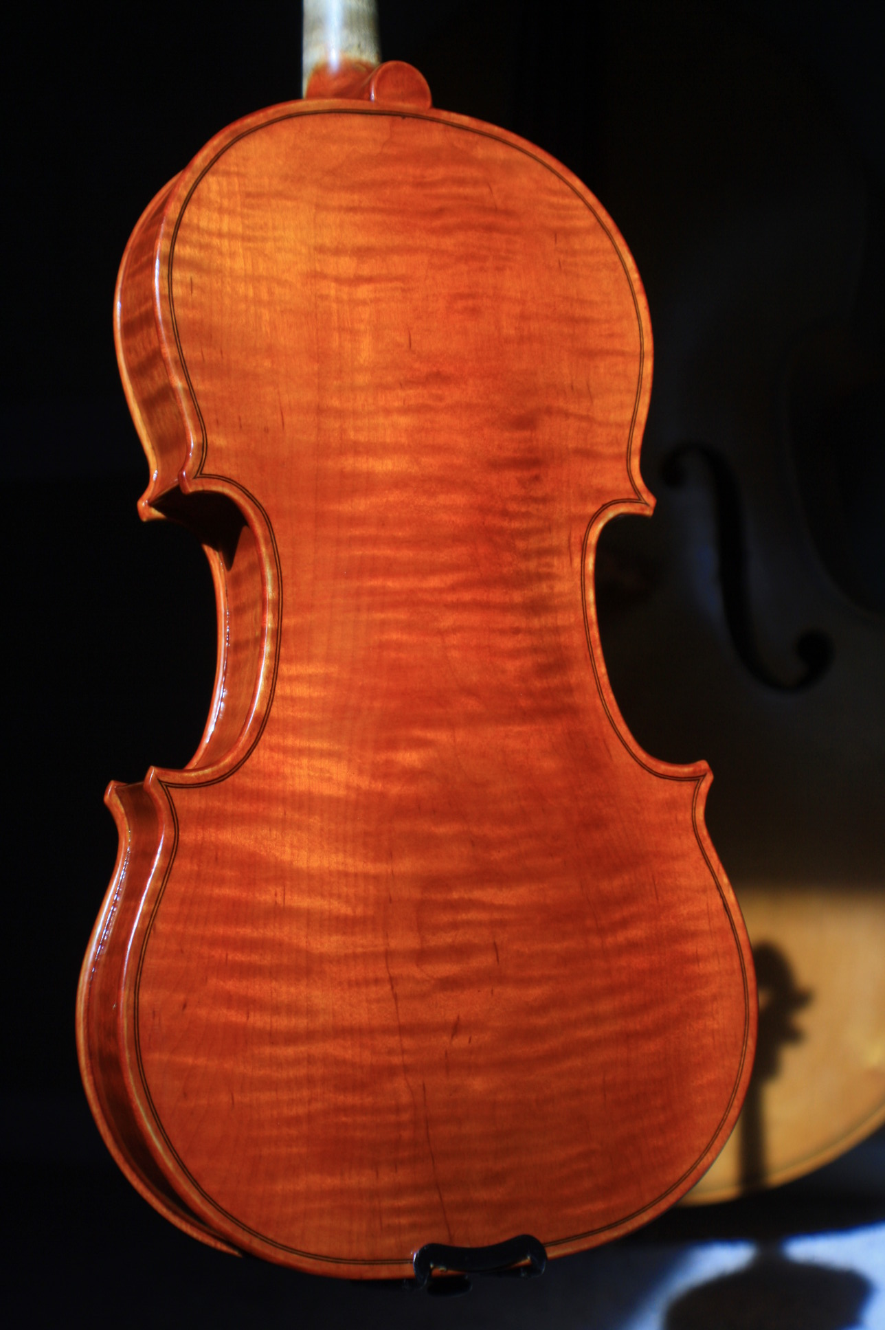 new violin back