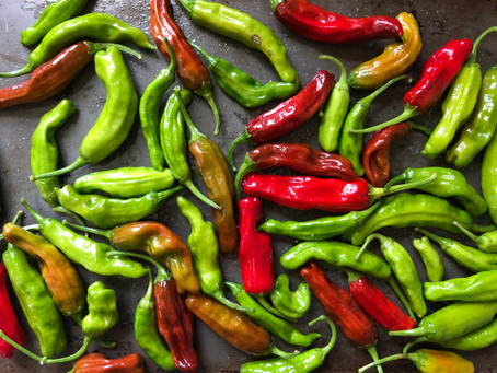 Shishito Peppers - A Farmer's Favorite