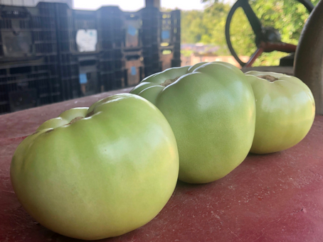 Green Tomatoes, what to do with you?