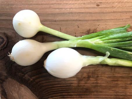 """How do I use """"Fresh Onions""""??"""
