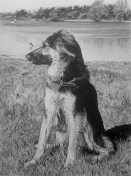 Dog pet portraits. Animal artist pet artist Frances Vincent. Animal drawings pet drawings
