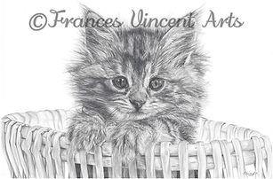 Basket Kitten
