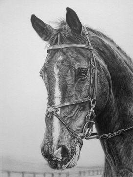 Horse pet portraits. Animal artist pet artist Frances Vincent. Animal drawings pet drawings