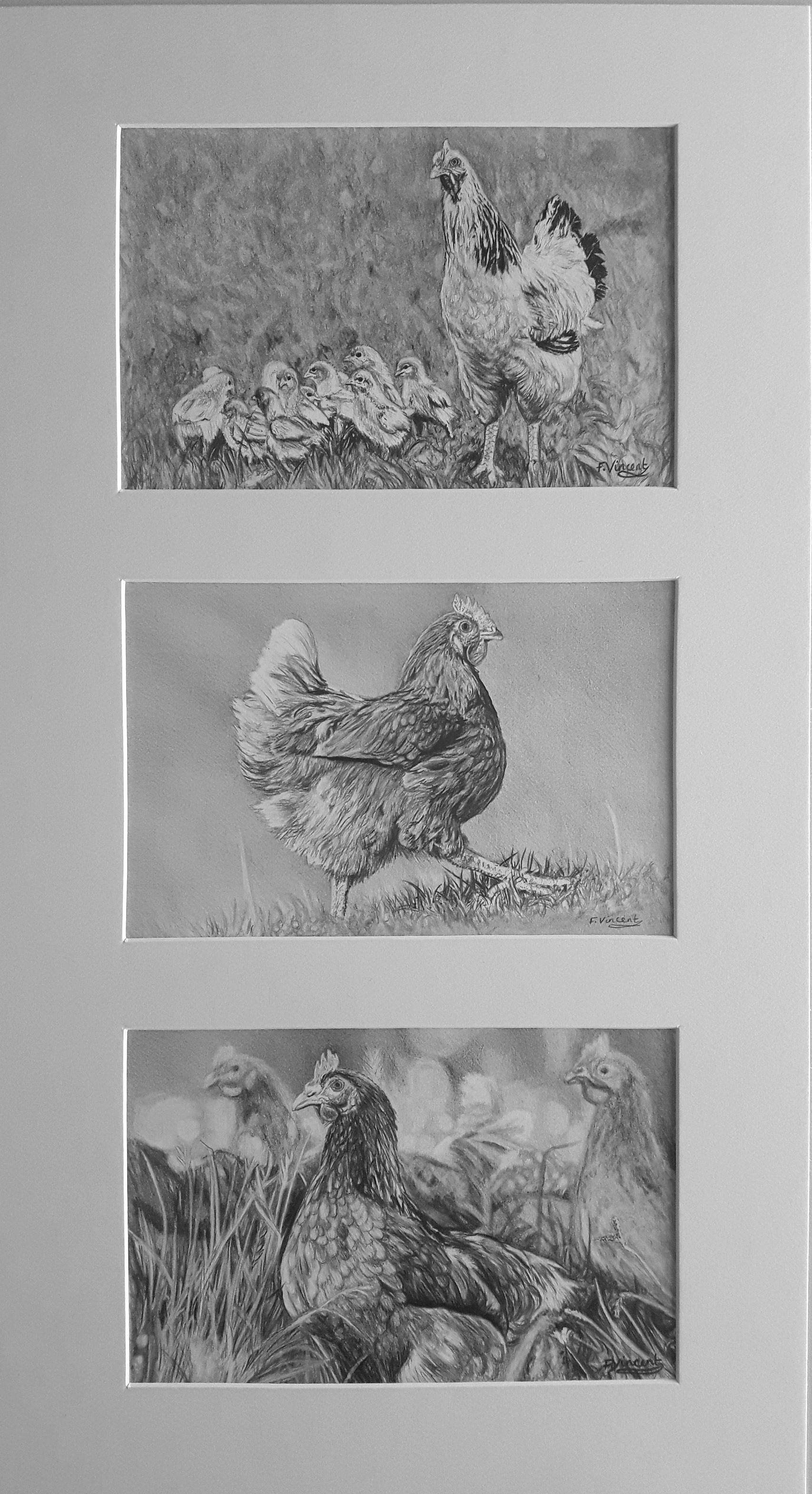 Chick-Chick-Chicken