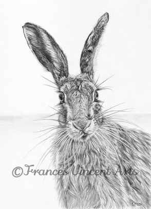 Stare of the Hare
