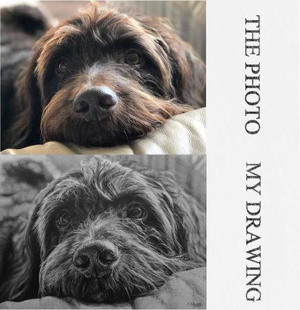 pet portrait artist dog portrait dog drawing pet artist