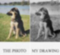 pet commisson dog portrait pet artist dog drawing pet portrait artist