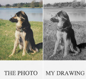 pet commisson dog portrait pet artist dog drawing pet portrait artist