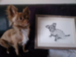 pet portrait drawing by uk animal and pet artist Frances Vincent. Award winning animal artist based in Suffolk