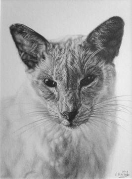 Cat pet portraits. Animal artist pet artist Frances Vincent. Animal drawings pet drawings