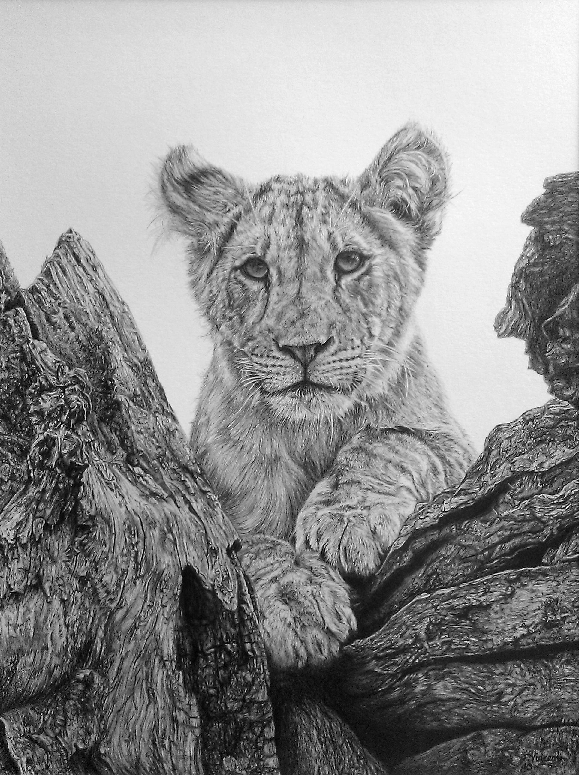Lions Eye View