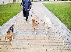Walking Dogs.webp