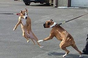 dogs reacting on leash.jpg
