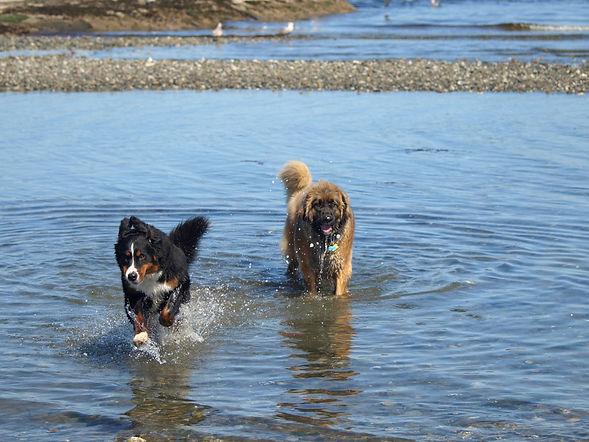 Juno and Belle.jpg
