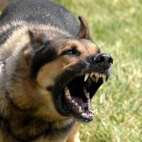 "Dogs that Yell ""Stay Away!""  Part 2 Are you an After Dark Dog Walker?"