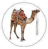 Camel circle base.jpg