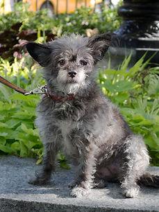 Bella Dog Portrait