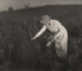 eaton_john__untitled__woman_picking_flowers___c__1930_.jpg