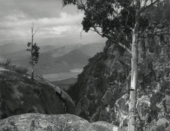 cazneaux_harold__ribbon_gum__mount_buffalo__victoria__c__1935_.jpg