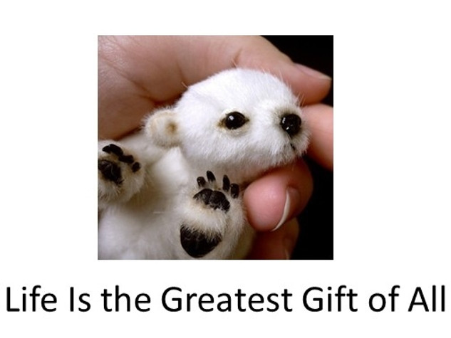 Life is the greatest gift.mp4