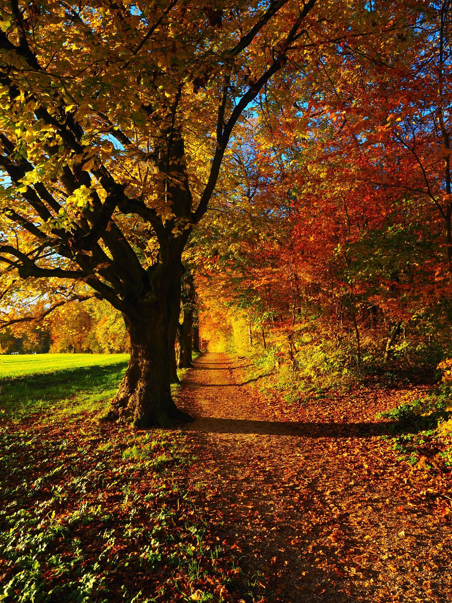tree-779831_1920