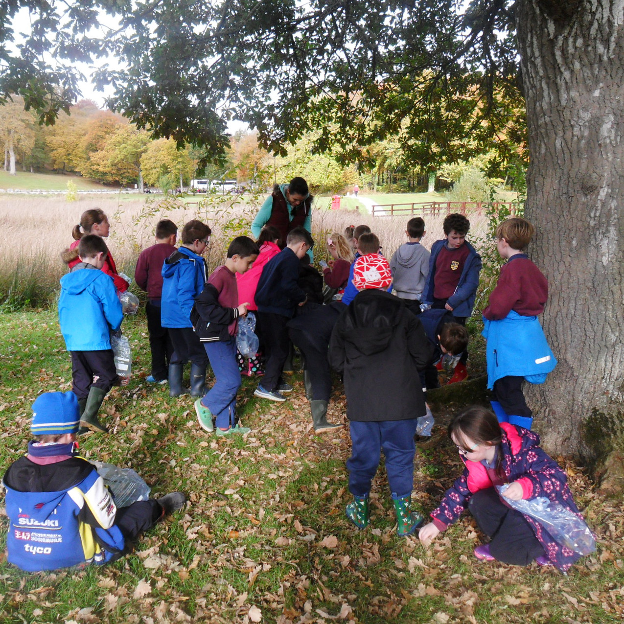 Searching for acorns