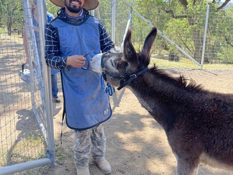 Interesting Donkey FAQs to Keep You Kicking!