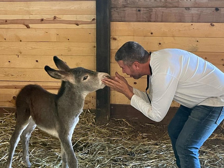 Hard Facts and Reality Check for New Donkey Owners