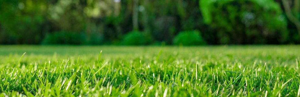 UK_advice-lawn-care-maintenance-lawn-fee