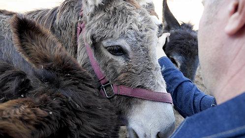 Name a Donkey!